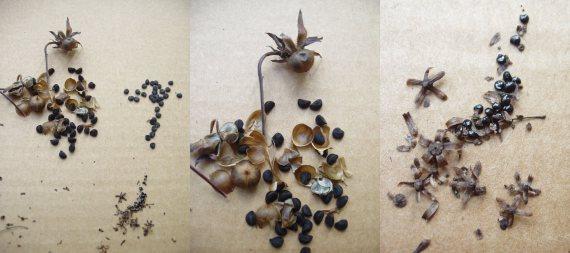 seeds-tumbling1