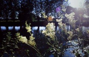 July 2002 - Meadowsweet - Thames